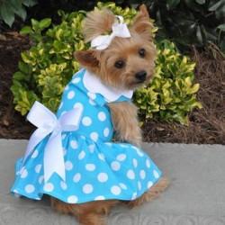 Blue Polka Dot Dog Dress with Matching Leash