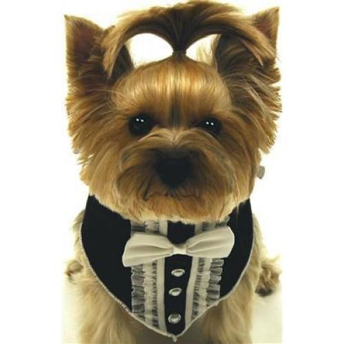 Tuxedo Dog Scarf in Black