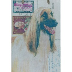 Afghan Hound - Tan & Black