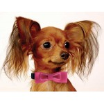 Classic Bowtie Dog Collar Collection - All Metal Buckles