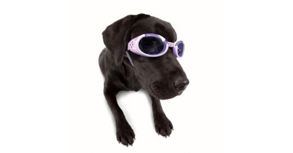 Doggles - Lilac Frame with Flowers Lilac Lens 2569799f6a
