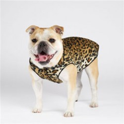 Gold Paw Fleece Dog Jacket in Different Prints!