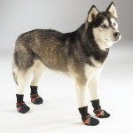 Guardian Gear Dog Boots - Orange