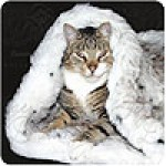 Tiger Dreamz Trundle, 3 Way Pet Bed