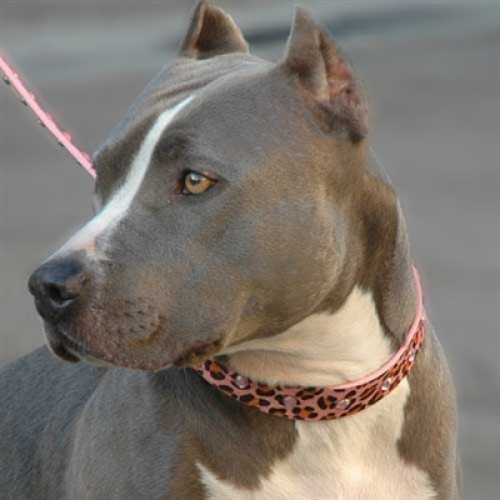 Pink Panther Dog Collar