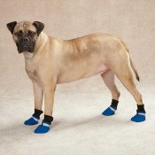 Dog Boots and Shoes