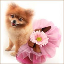 Fancy Dog Tutus